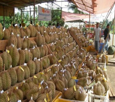 durian9.jpg